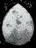 תמונת הביצה