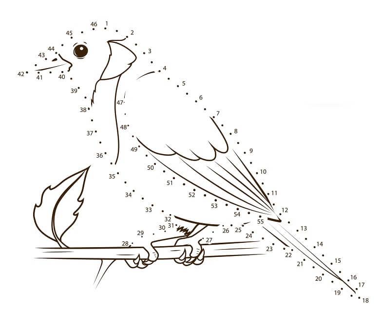 חיבור נקודות ציפור