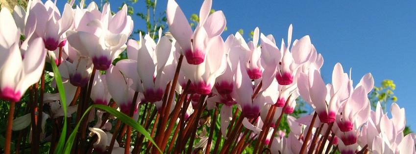 רקע לפייסבוק פרחים