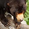תרכיבו את החלקים של הפזאל עד שתקבלו תמונה שלמה של הדוב.